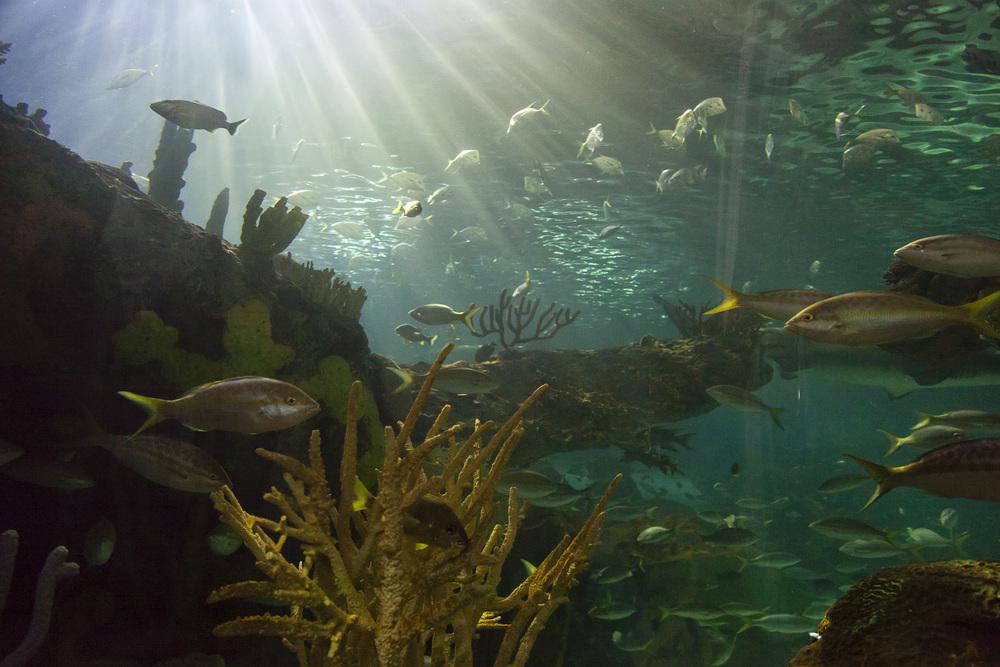 aquarium-008.jpg