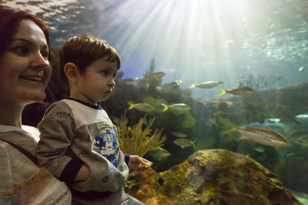 aquarium-009.jpg