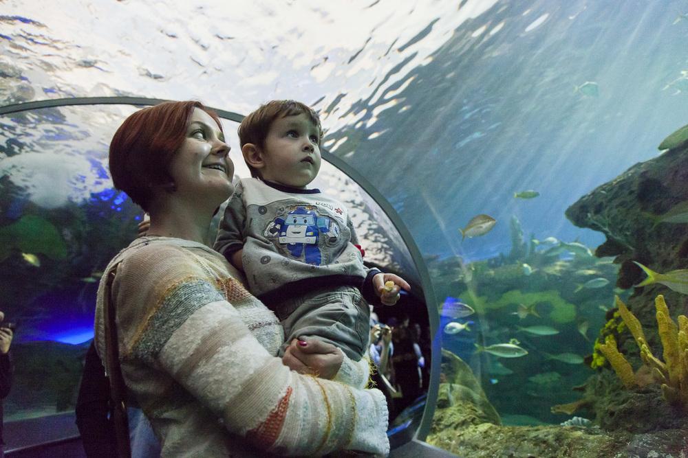 aquarium-010.jpg