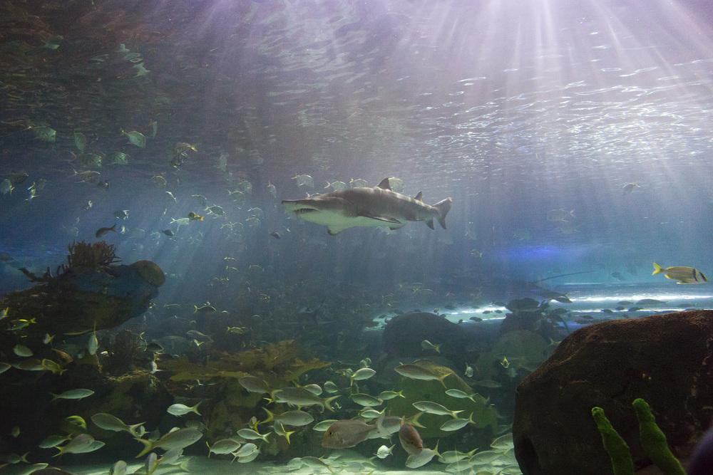 aquarium-012.jpg