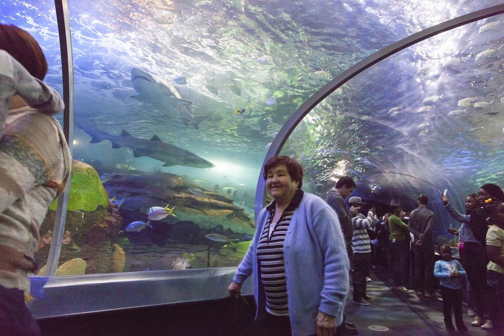 aquarium-017.jpg