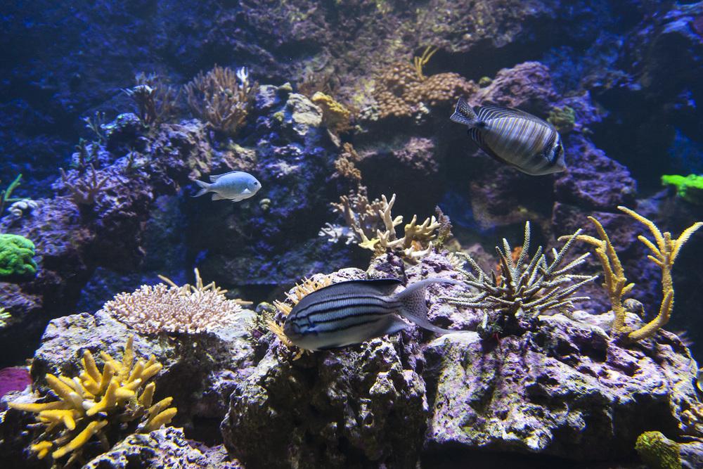 aquarium-020.jpg