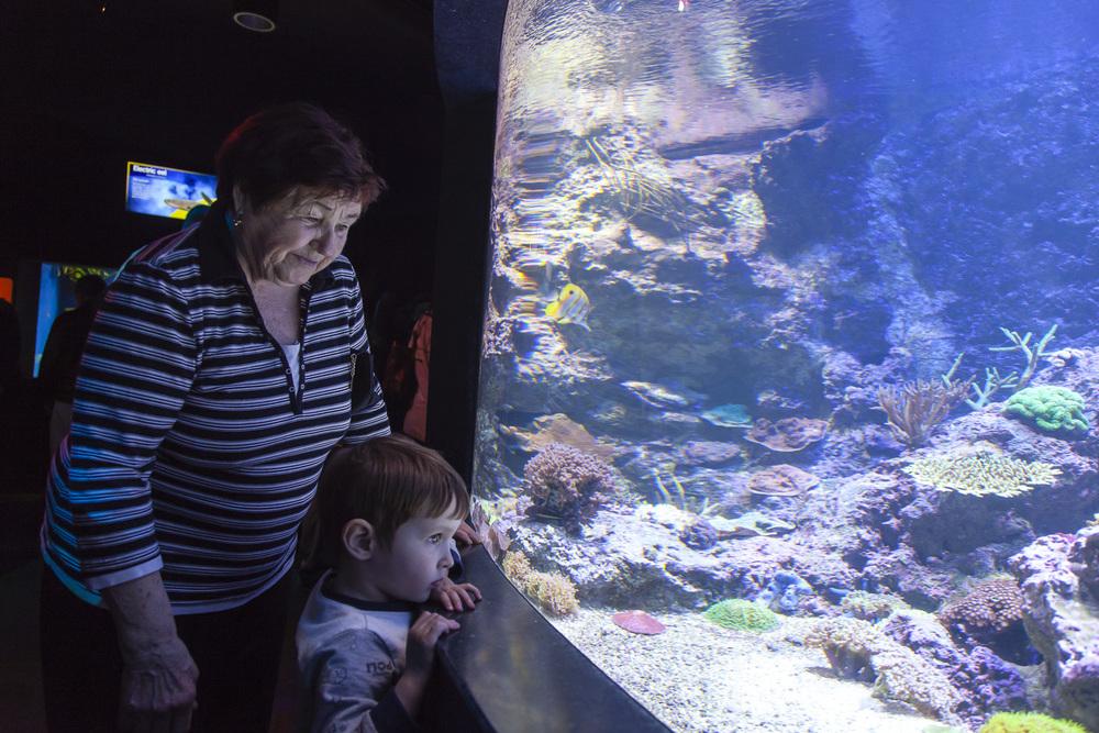 aquarium-021.jpg