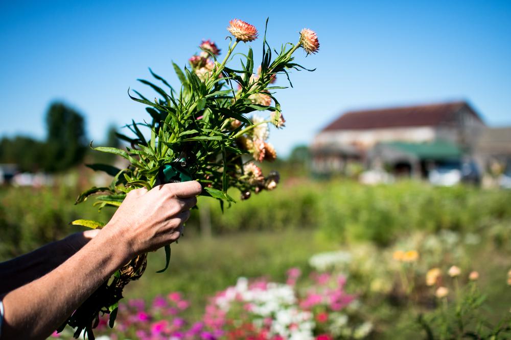 Field Floral Studio-27.jpg