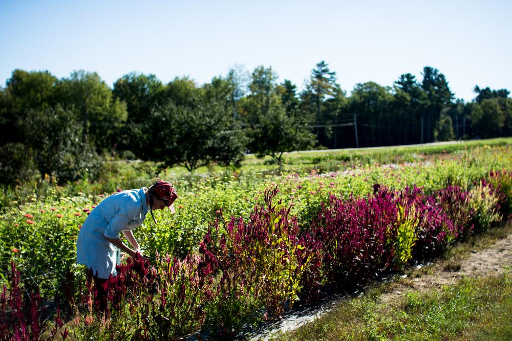 Field Floral Studio-23.jpg