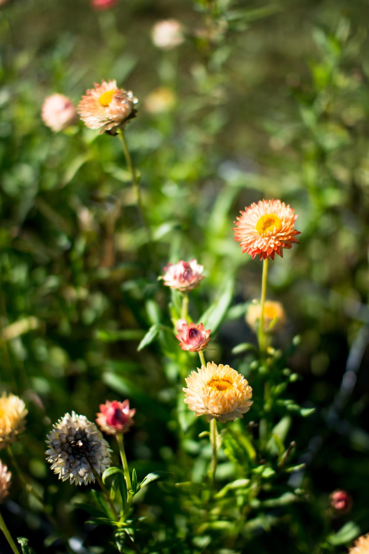 Field Floral Studio-29.jpg