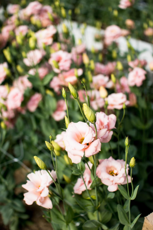 Field Floral Studio-9.jpg