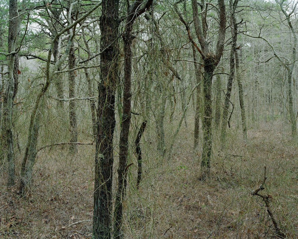 Beech Forest, Provincetown, MA. 2009