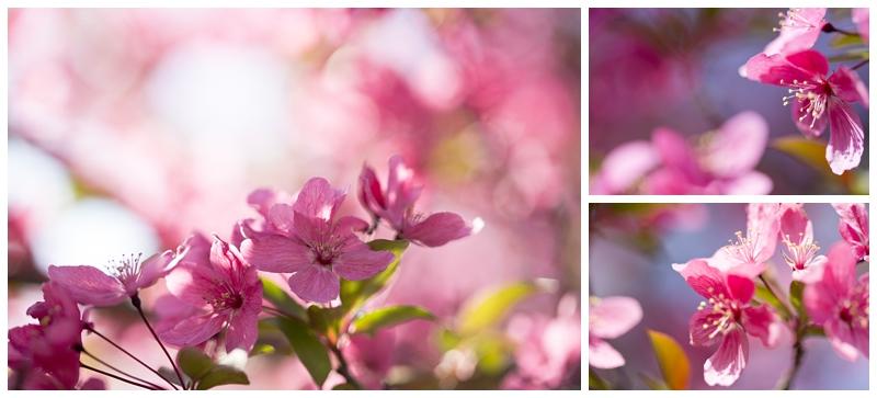springmacro_0009.jpg
