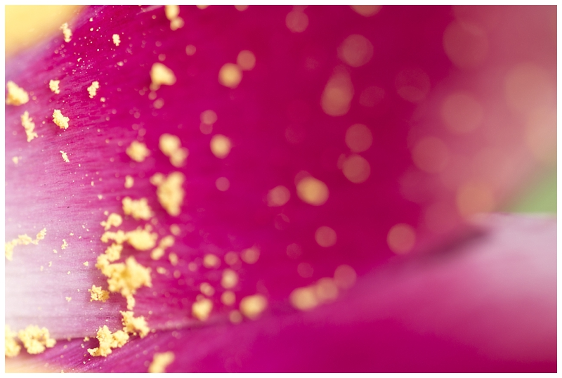 springmacro_0032.jpg