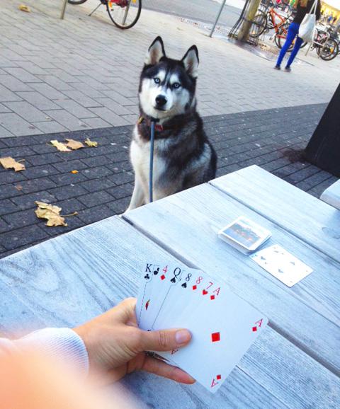 cards & husky