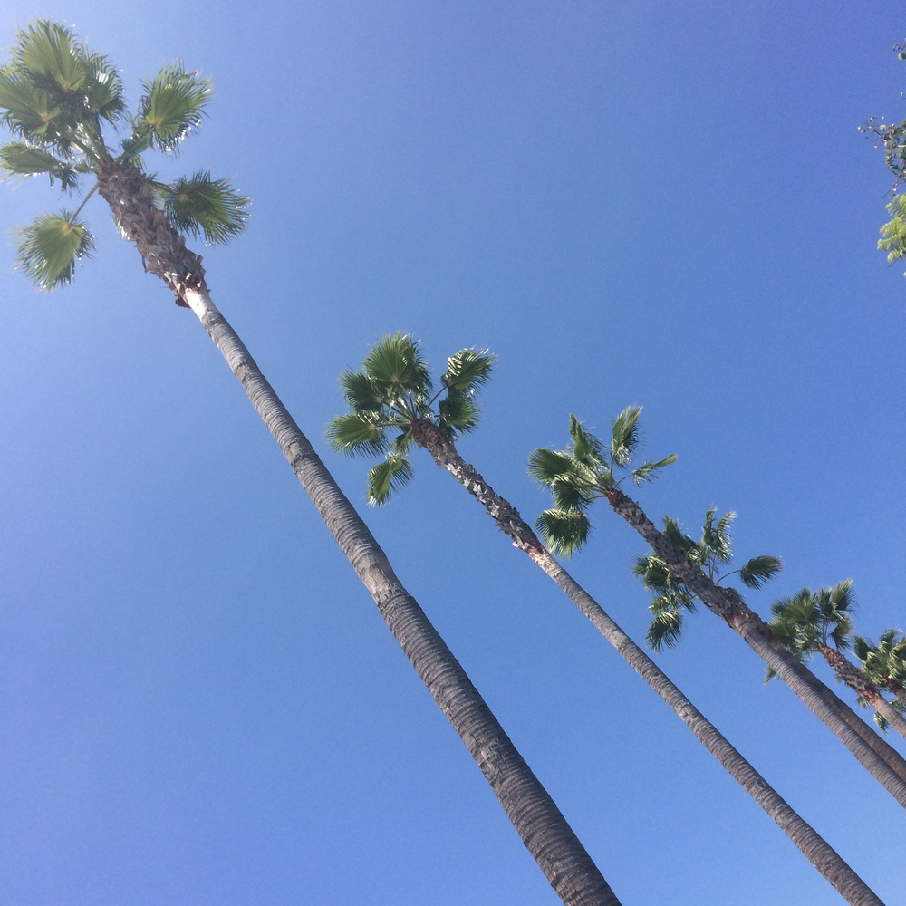 Obligatory Cali palm tree pic