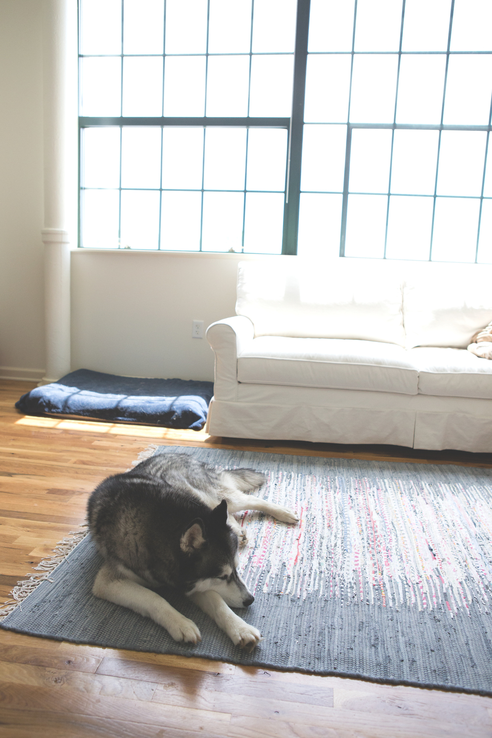 Home/office tour, part 2 couch, rug, homemade dog bed.