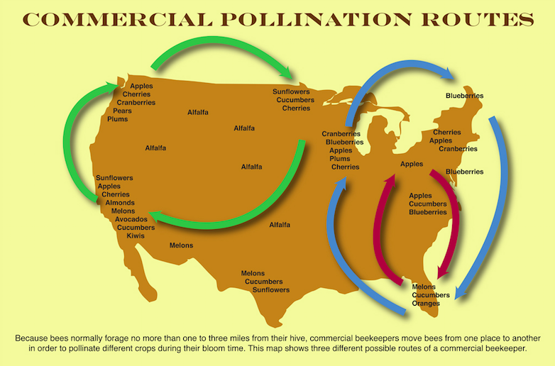 commercial beekeeper travel routes (source: www.foe.org)