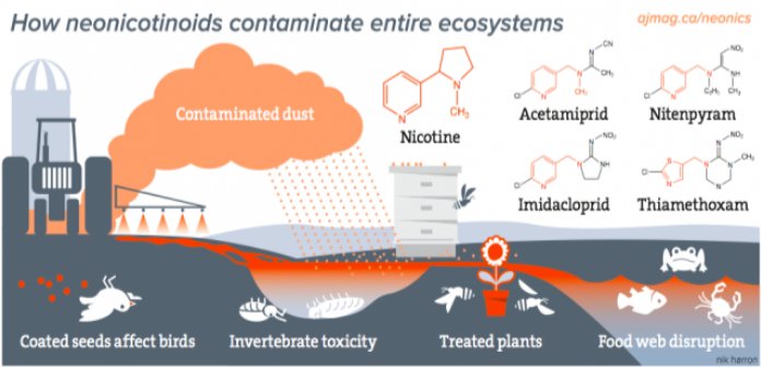 how neonics contaminate entire ecosystems (source: www.foe.org)