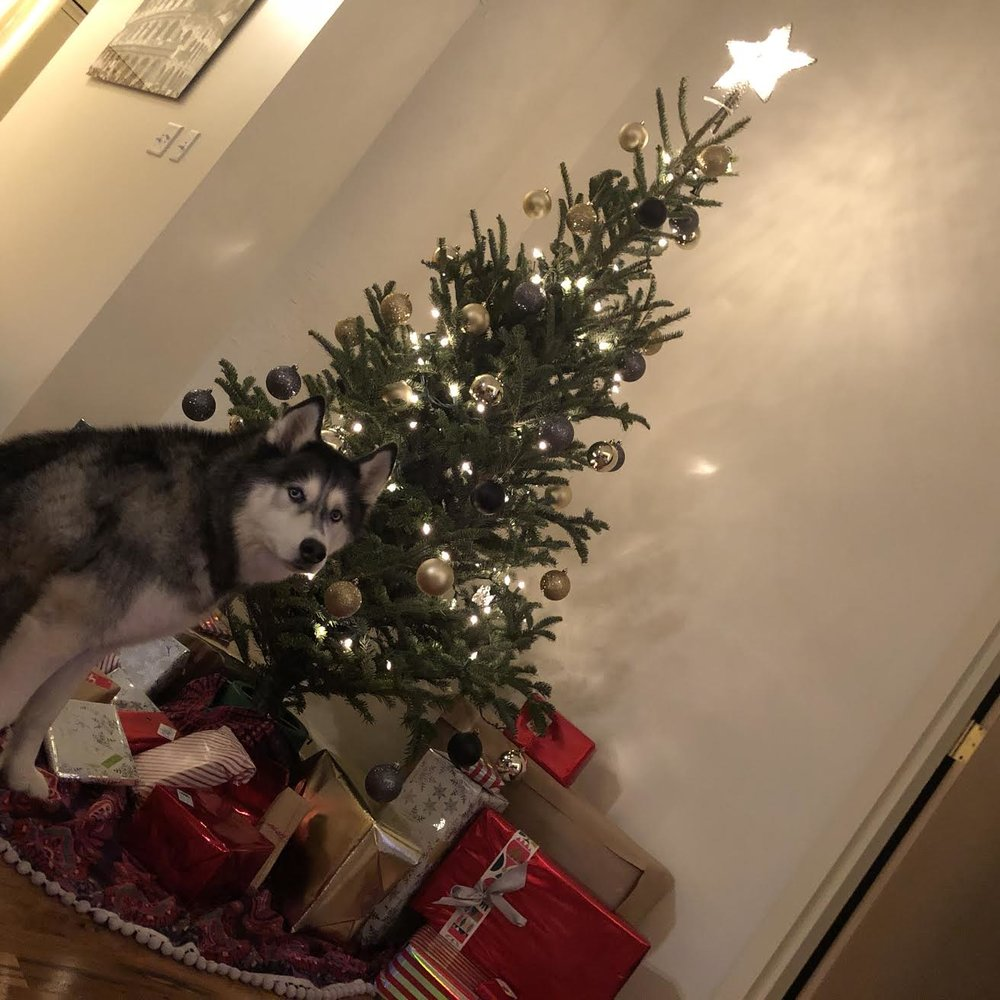 Christmas - December, 2017