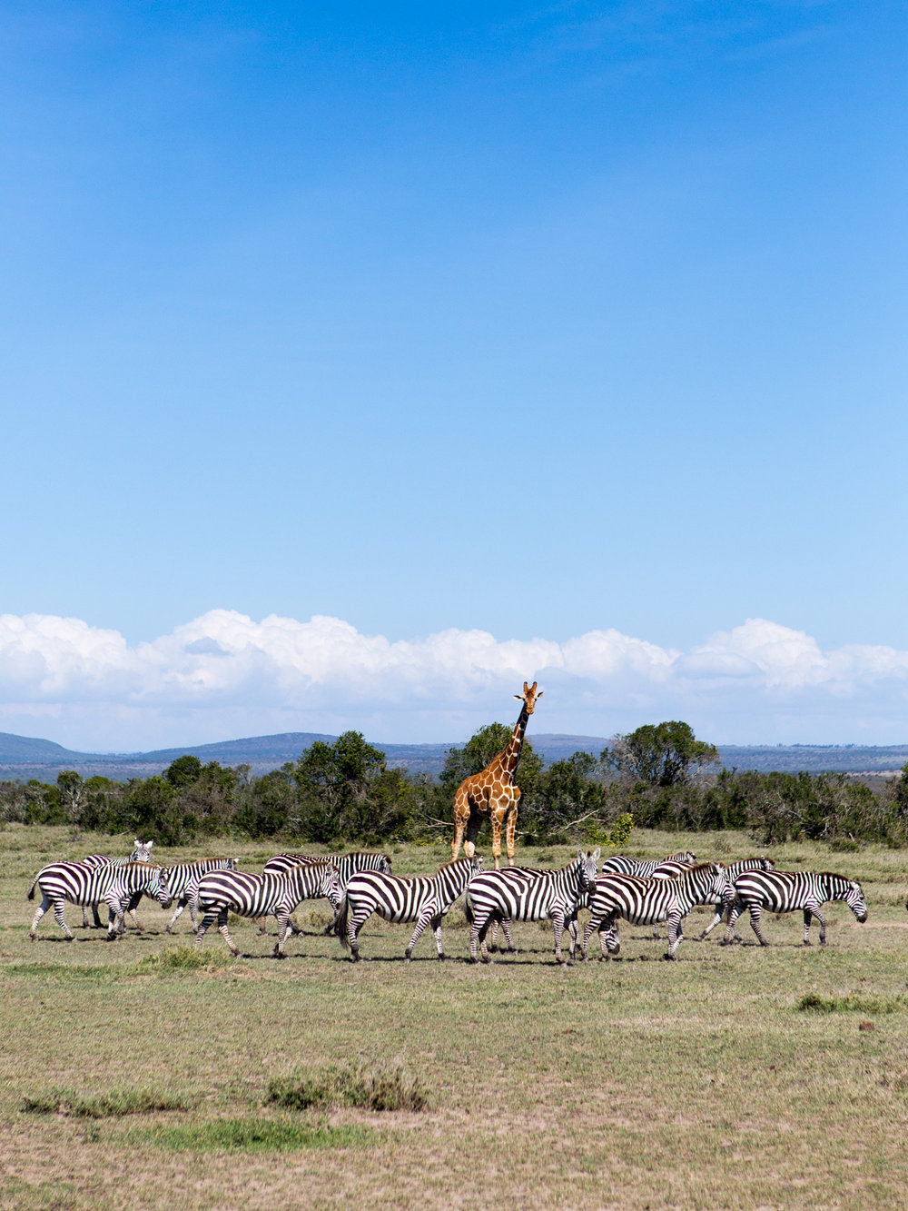 On the plains at our Safari Yoga Retreat