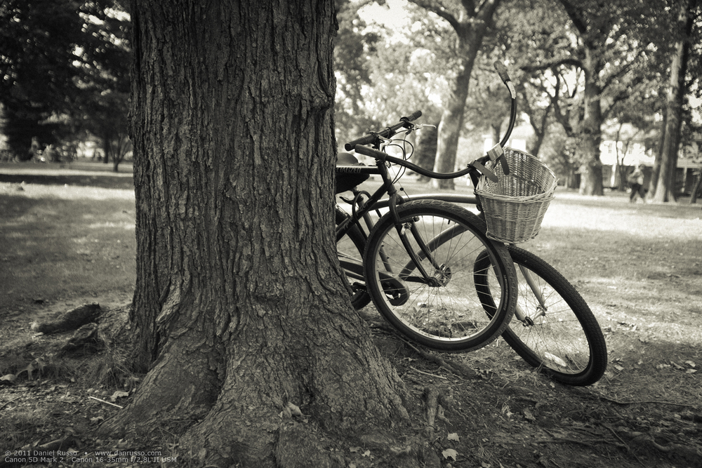 Lost Bicycles In Time lg.jpg