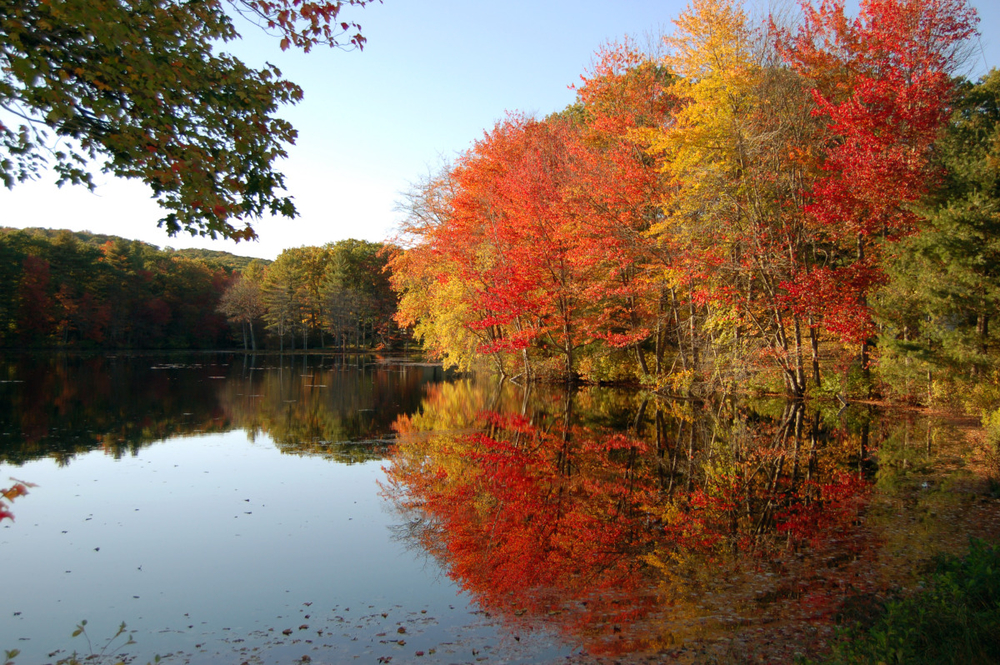 reflection of fall.jpg