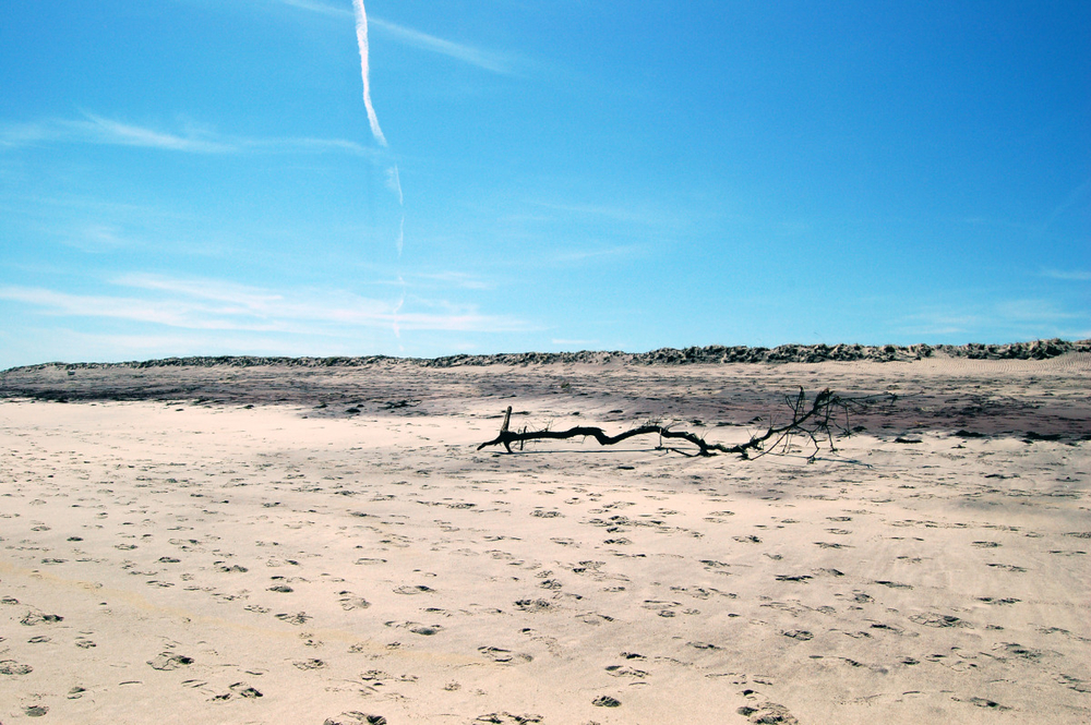 across the barren beach.jpg
