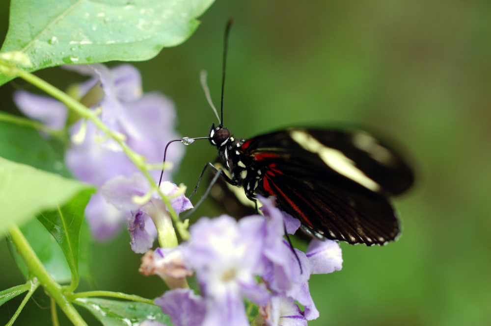 butterfly with water drop.jpg
