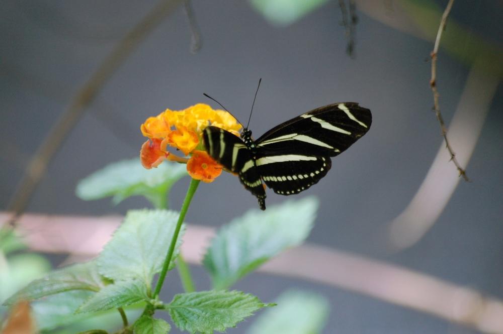 butterfly1b.jpg