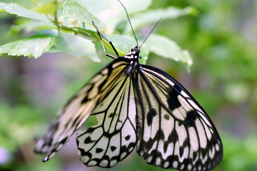butterfly1f.jpg