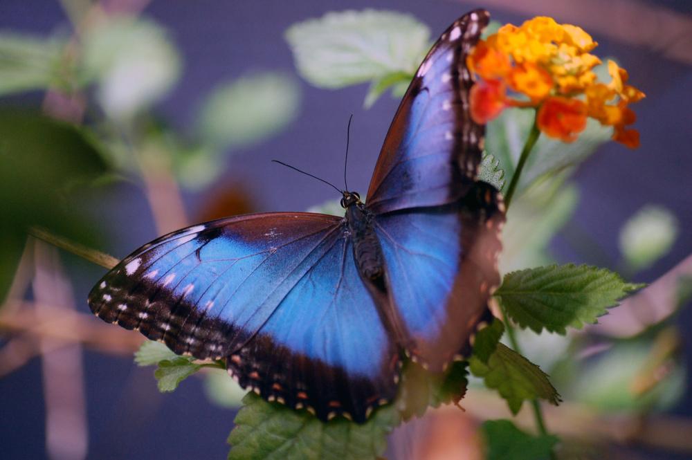 butterfly1d.jpg