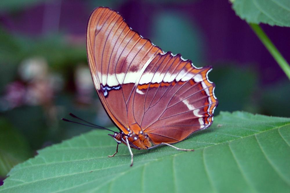 butterfly1g.jpg