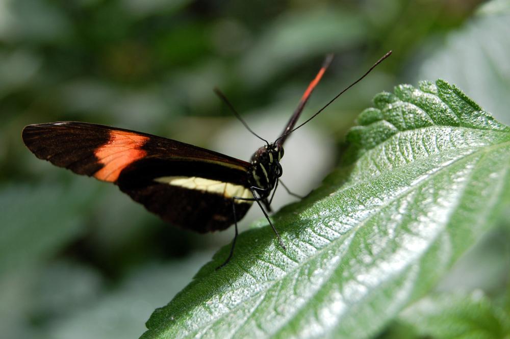 butterfly1i.jpg
