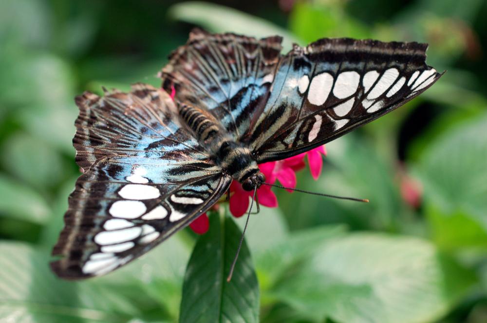 butterfly1j.jpg