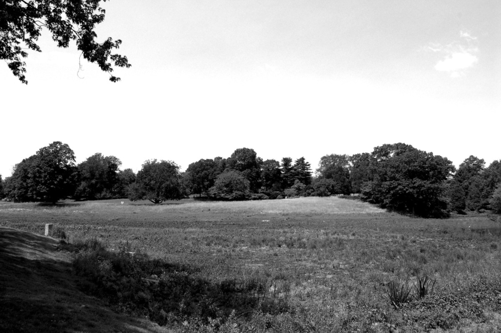 pasture in black and white.jpg