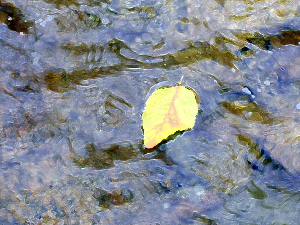 leaf in water.jpg