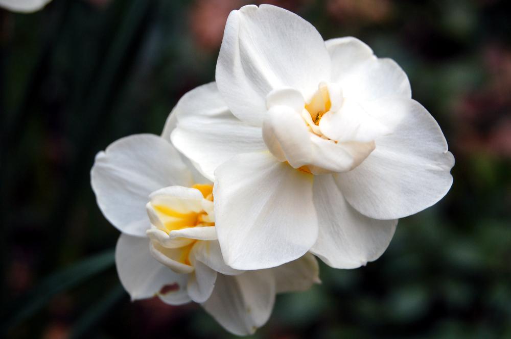 White Grace.jpg