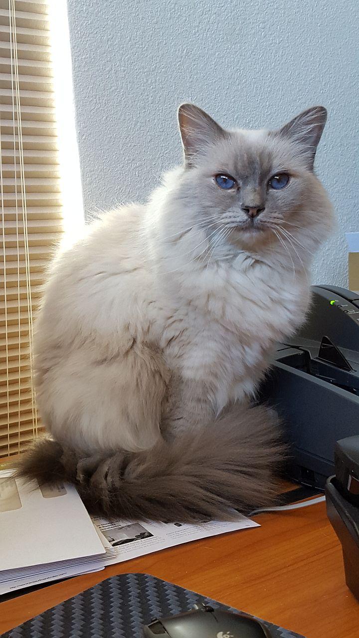 Cat 2 1280.jpg