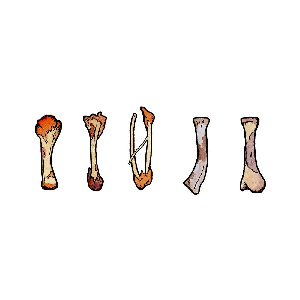 chicken bones.jpg