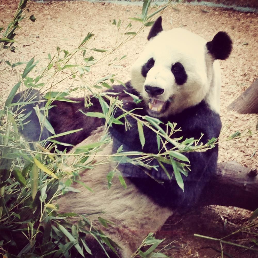 Panda Smiles.JPG