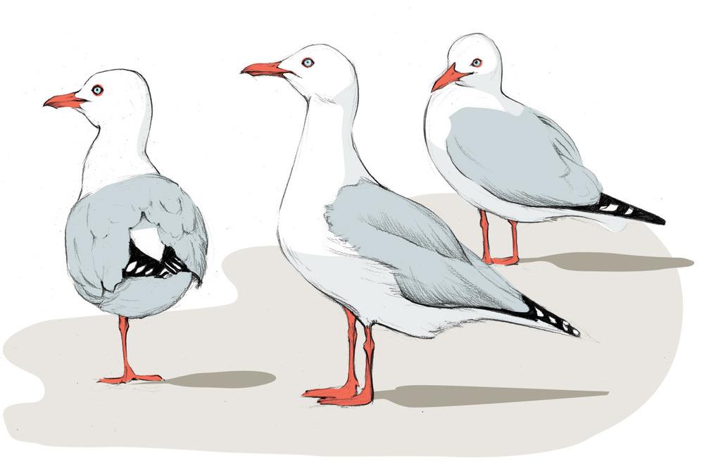 standing-gull-copy.jpg