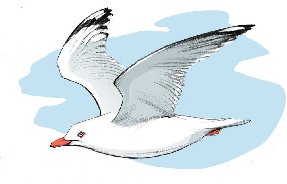 flying-gull-copy.jpg