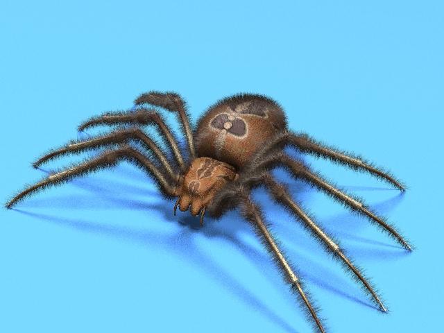 Spider-01.jpg