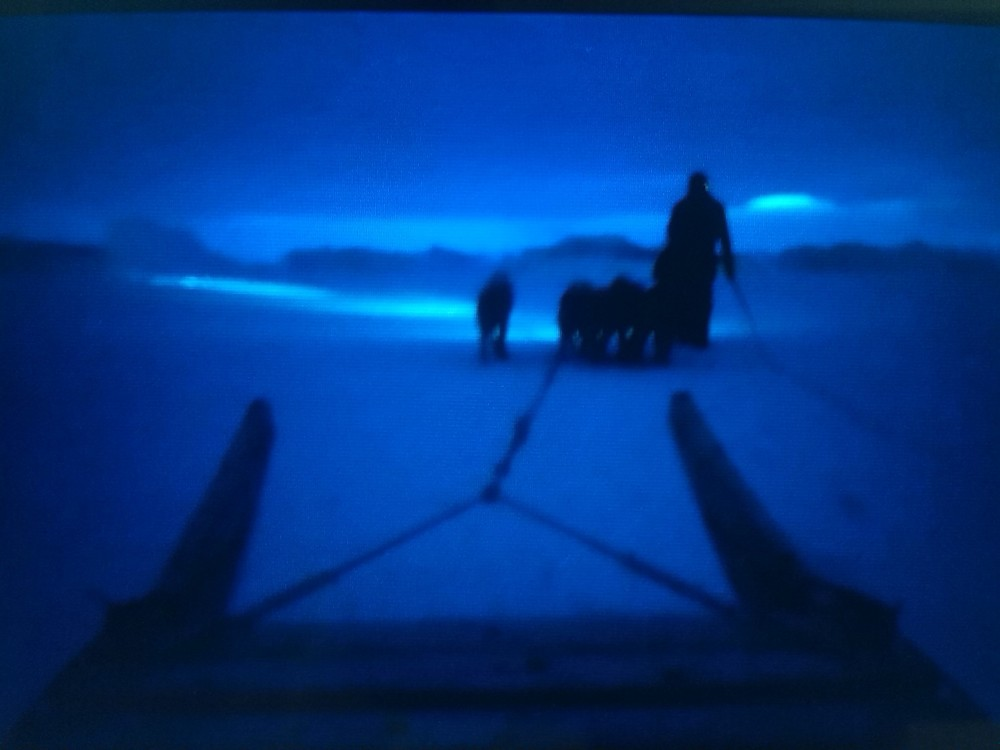 Walking a team of five across the sea ice