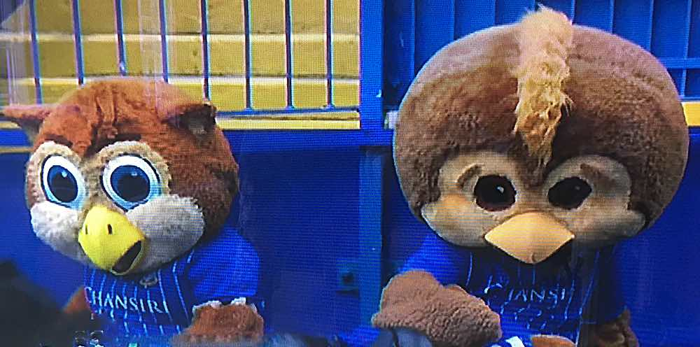 THAT SINKING FEELING:  OWLS MASCOTS LOOK ON IN HORROR
