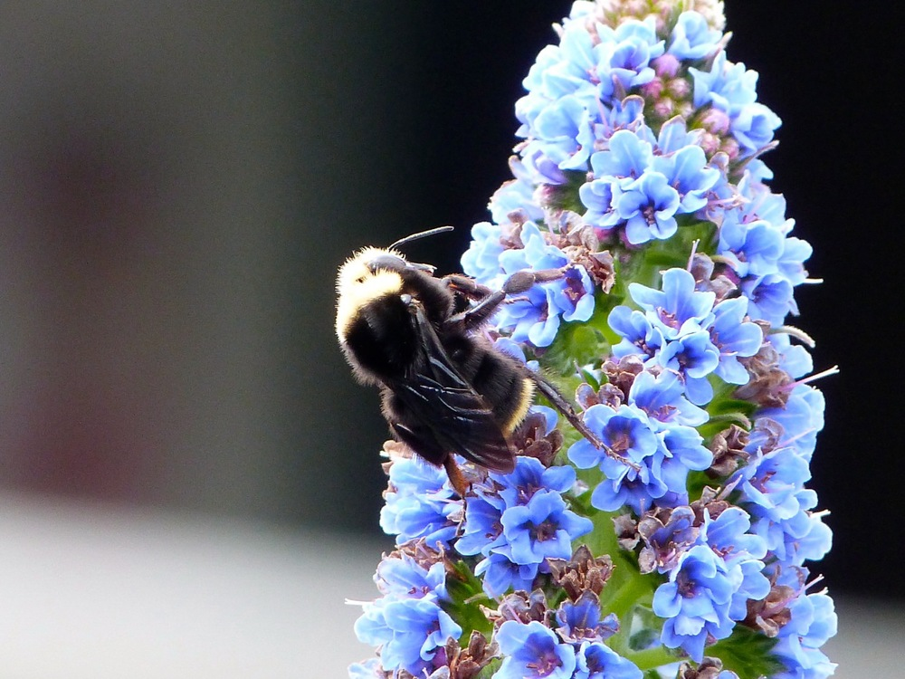 179. The Pollinator.jpg