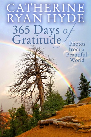 365 Days of Gratitude: Photos from a Beautiful World
