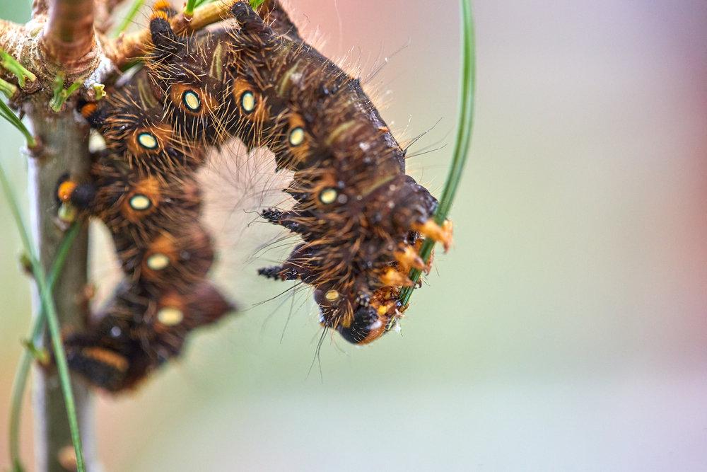 Caterpillars - 2016    - 40276- 000095.jpg