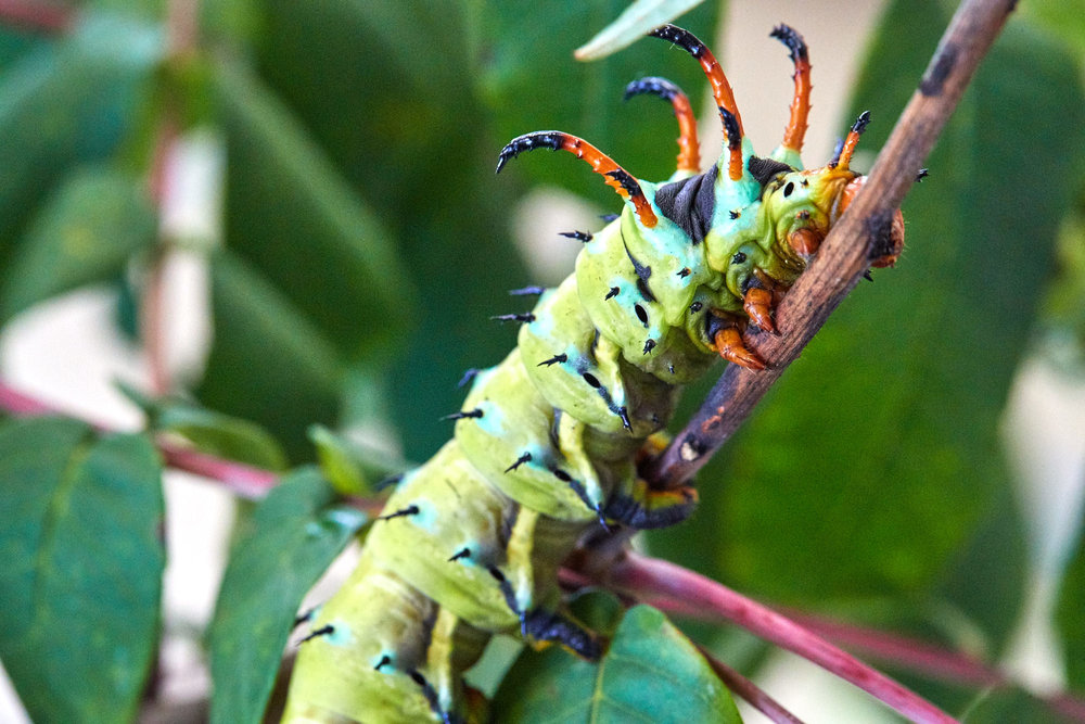 Caterpillars - 2016    - 40297- 000108.jpg