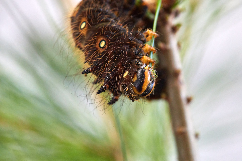 Caterpillars - 2016    - 40302- 000111.jpg