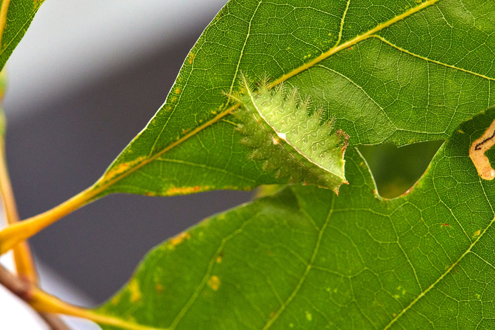 Caterpillars - 2016    - 40307- 000112.jpg