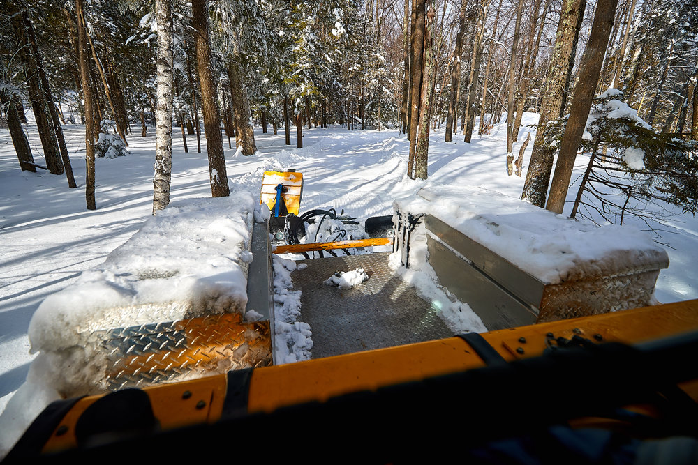 Grooming Nordic training trail