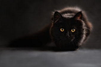 cat-silhouette-cats-silhouette-cat-s-eyes.jpg